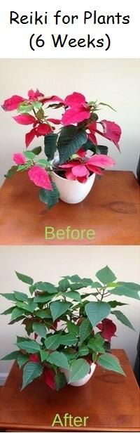 Reiki Energy for Plants